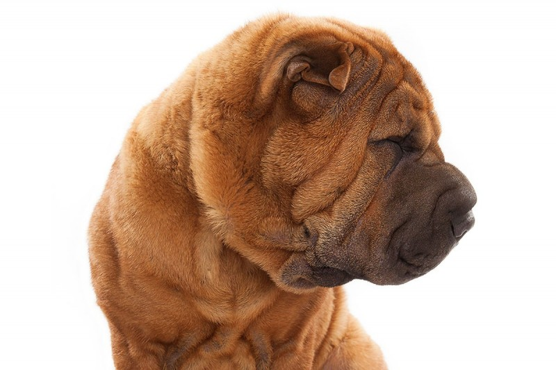 Keith Barraclough, Chinese Sharpei