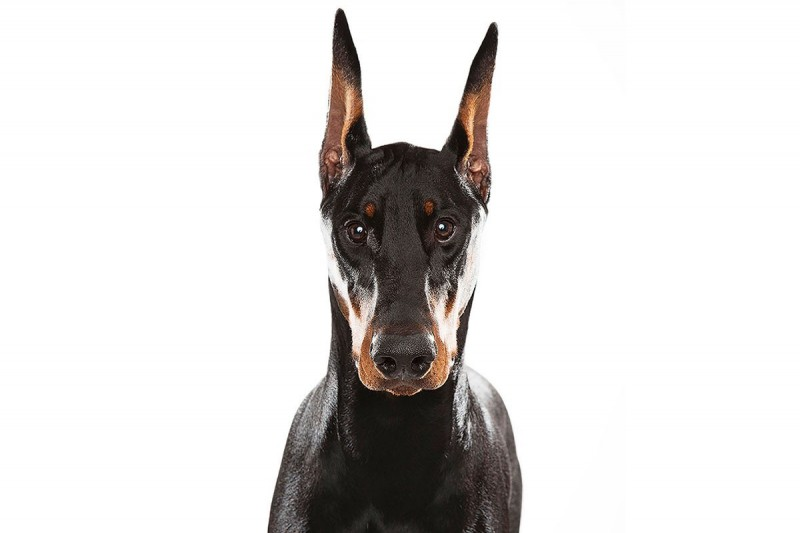 Keith Barraclough, Doberman Pincher